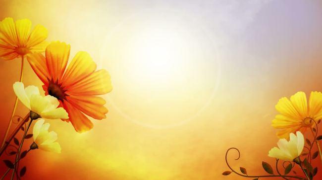鲜花边框唯美暖色高清视频背景素材