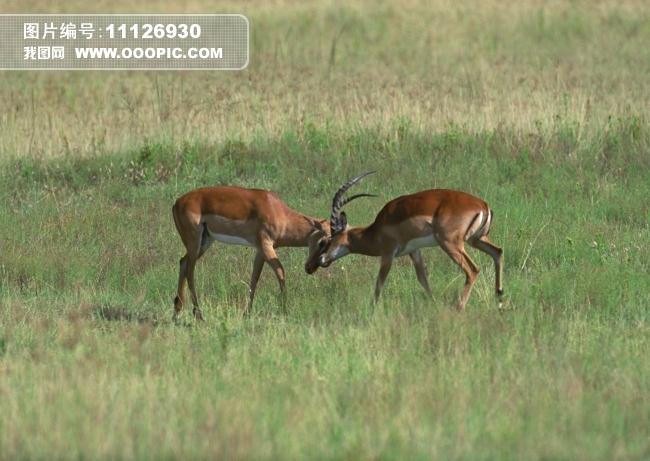 野生动物世界图片素材(图片编号:11126930)_动物图片