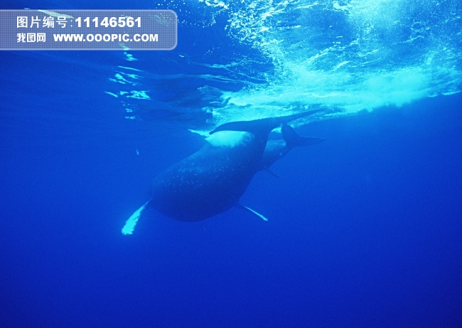 太平洋 大海风景 海洋 海浪 海豚 海底世界 海鱼 白豚 风景 海生动物