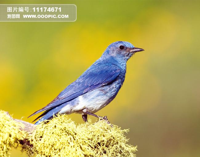 站立的小鸟