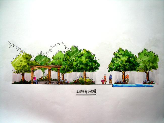 手绘植物效果图