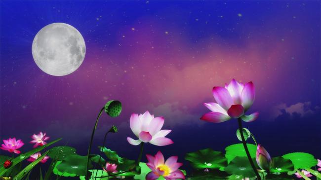 中秋月亮月色荷花池led背景视频