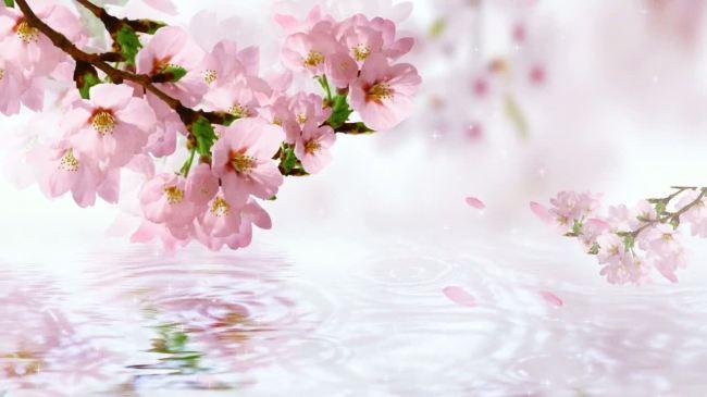桃花枝手绘素材