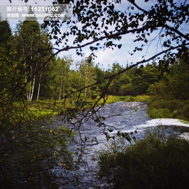 图片素材 树木 森林 河流/小溪森林树木河流高清大图