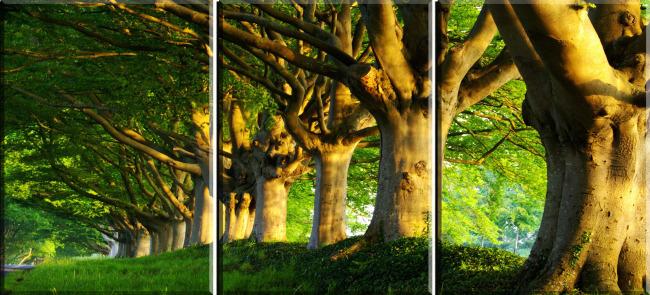 客厅长青树大树装饰画
