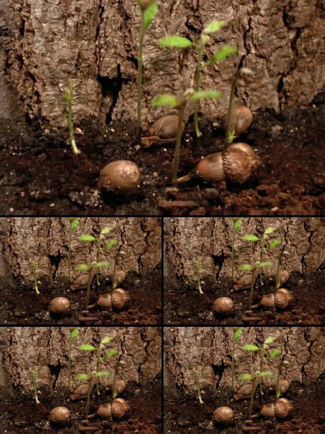 种子植物发芽生长过程视频素材下载