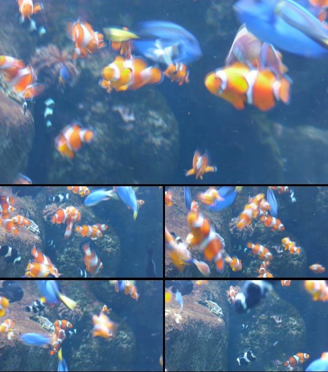 壁纸 动物 海底 海底世界 海洋馆 水族馆 鱼 鱼类 650_737