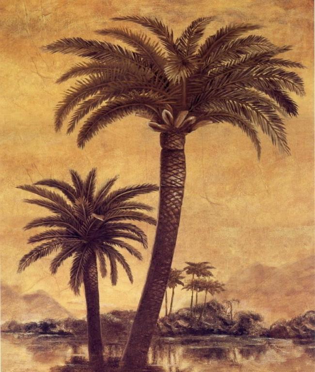 手绘椰子树图片