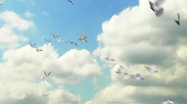 蓝天白云下鸽子小鸟飞翔04