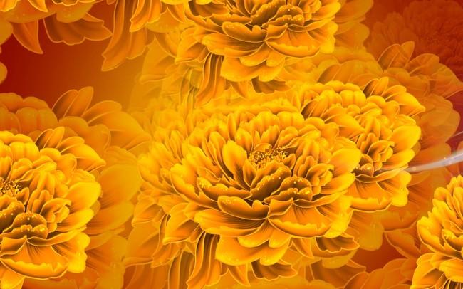金色牡丹花视频