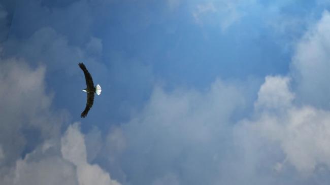 自由飞翔的鹰图片 自由飞翔词谱 自由飞翔乐谱 自由飞翔美景 新郑新闻