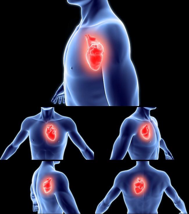 人物身体心脏视频动画1080p模板下载图片编号: