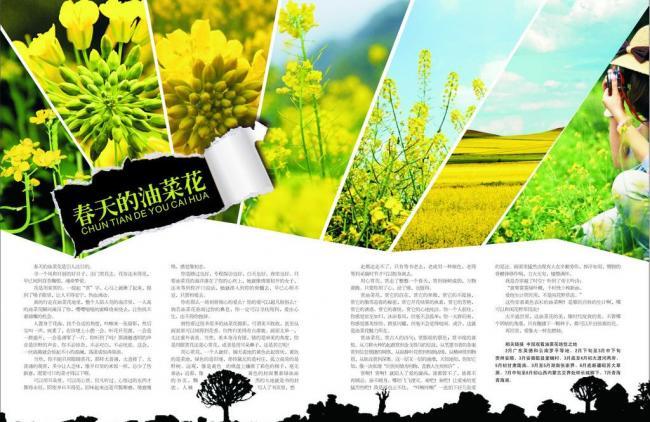 春天/春天的油菜花图片