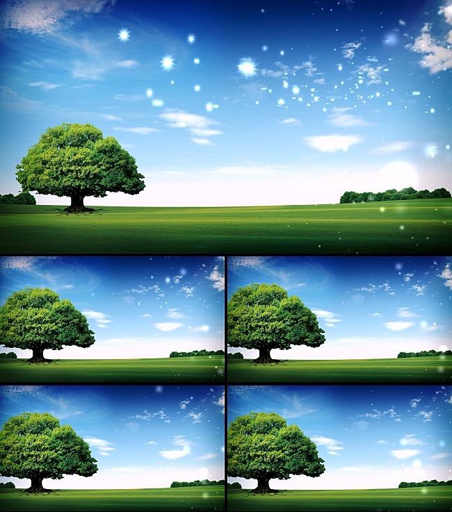 树长大大气原野视频素材