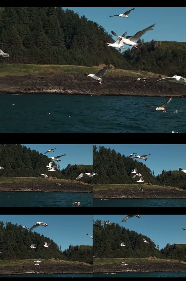 图片蓝天白云海鸥图片矢量海鸥海鸥飞翔海鸥简笔画