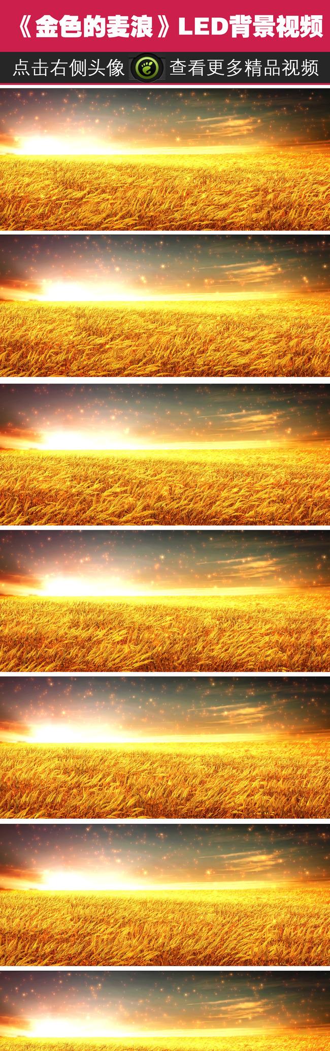 歌曲《风吹麦浪》舞台led背景视频