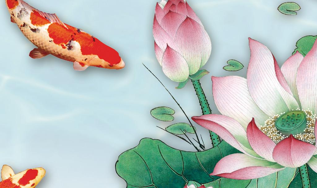 水塘金鱼荷花图片