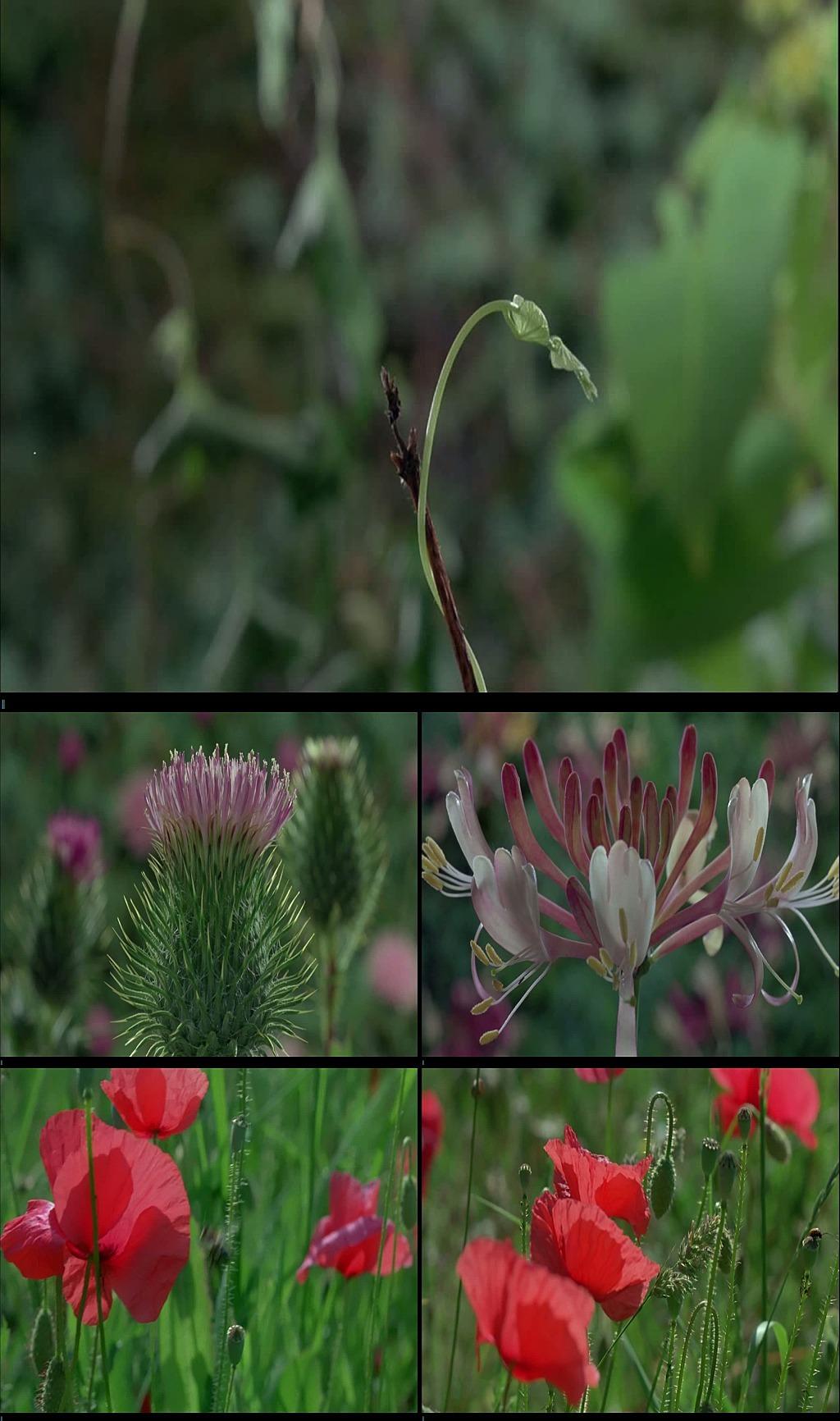 植物生长花朵生长视频素材