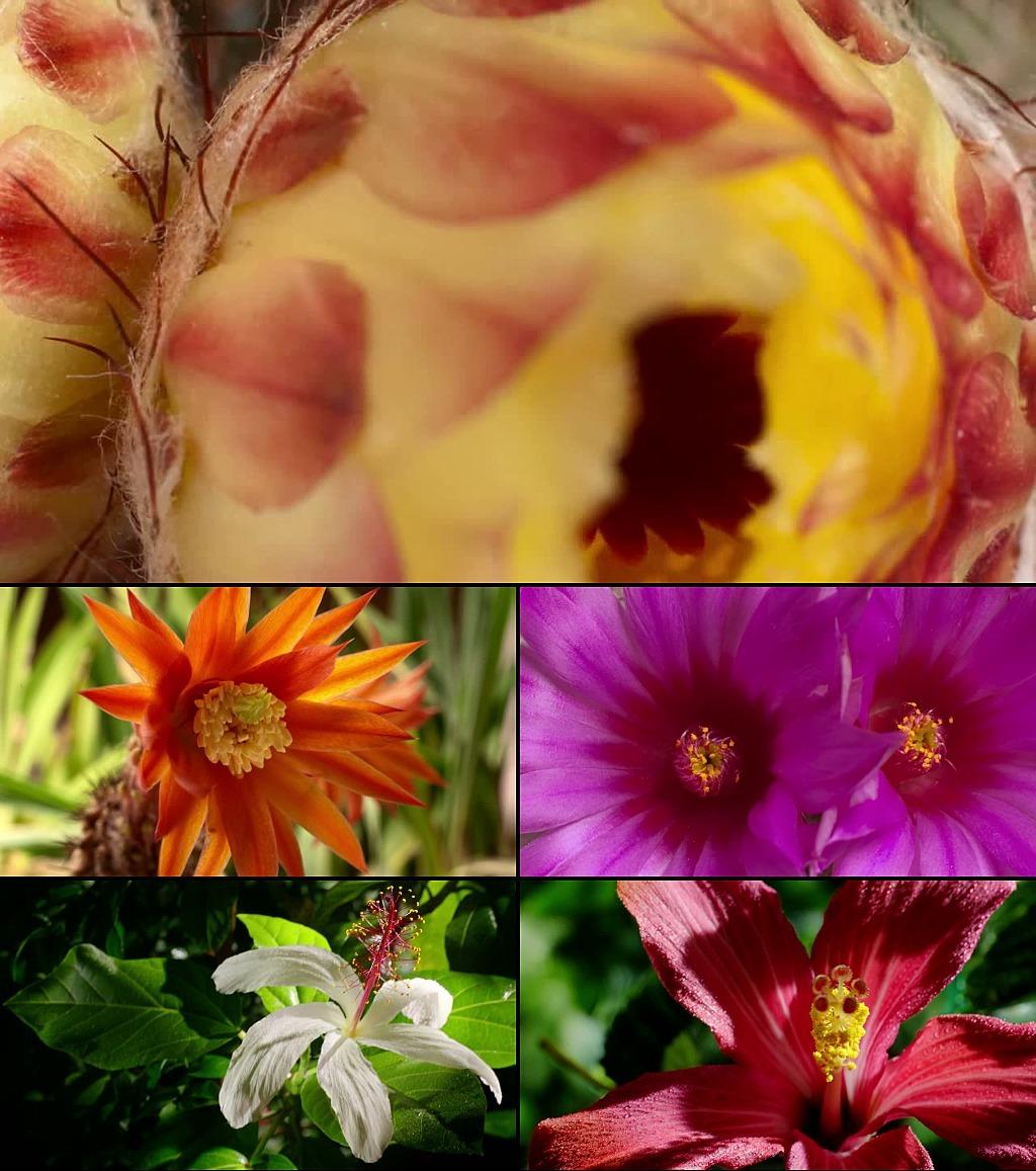高清树叶花朵生长视频素材