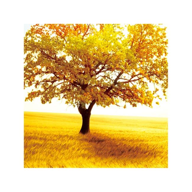 金色秋天风景画