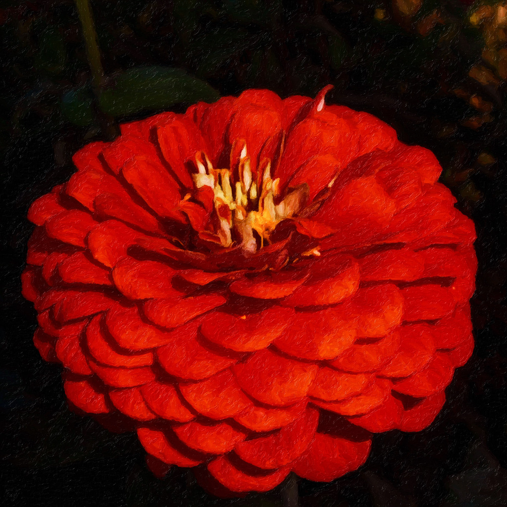 高清油画手绘花朵大丽花装饰画