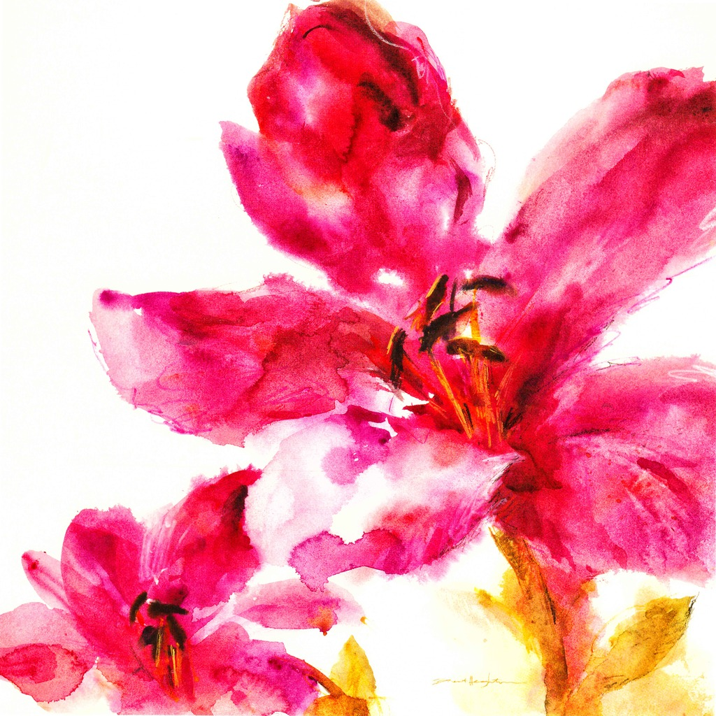手绘 水彩 花朵 花卉
