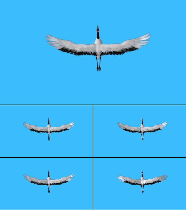 高清仙鹤视频素材可抠像图片下载仙鹤俯视飞舞翅膀飞翔 丹顶鹤 鸟类