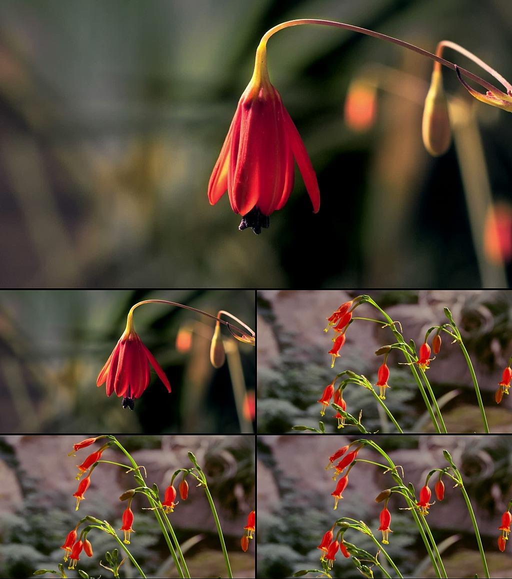 花朵绽放的步骤图