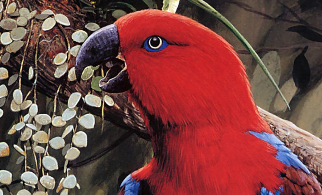 高清手绘花鸟画玄关背景墙鹦鹉