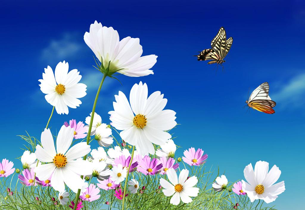 背景墙 font/白色野菊花蝴蝶电视背景墙图片模板下载