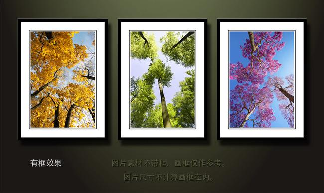 漂亮树干树枝装饰画无框画三联画挂画