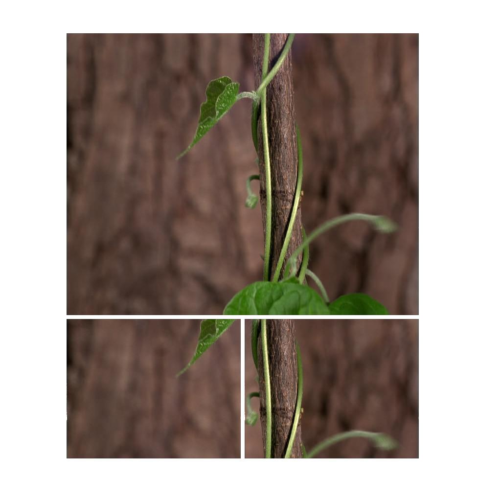 植物生长生长过程自然世界