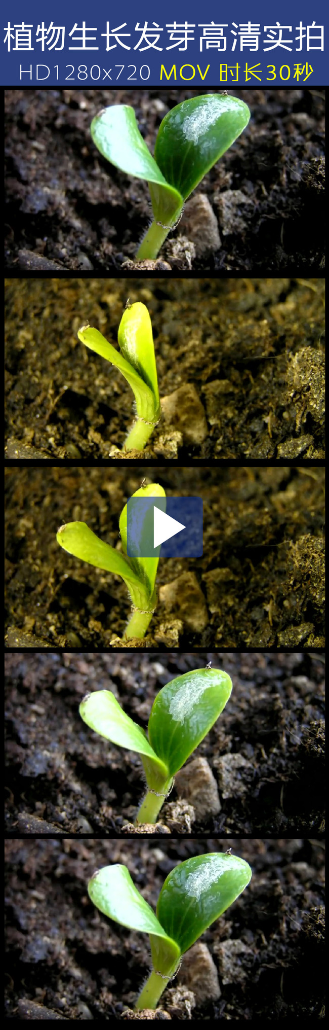 植物发芽成长过程动态素材