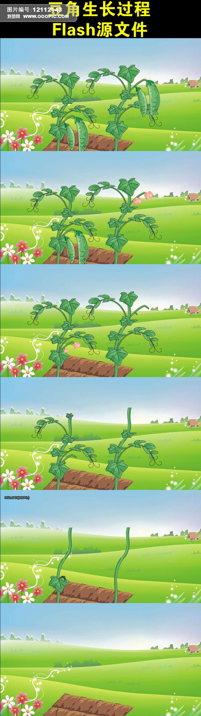 植物生长动画豆角生长过程动画演示
