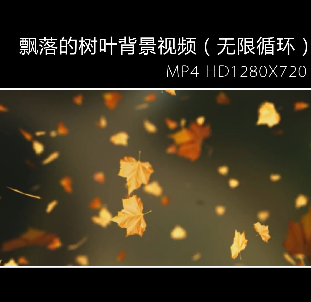 飘落的树叶背景视频(无限循环)图片