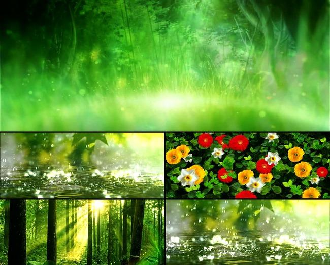 唯美森林鲜花开放下雨雨中竹林粒子阳光图片