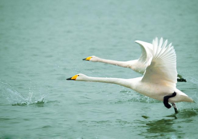 飞到南方的动物