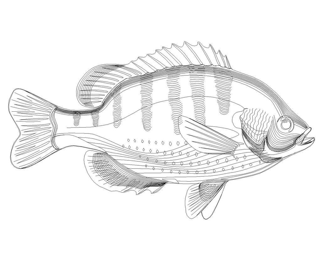 室内设计 cad图库 cad图纸 > cad制作的观赏鱼图块  下一张&gt