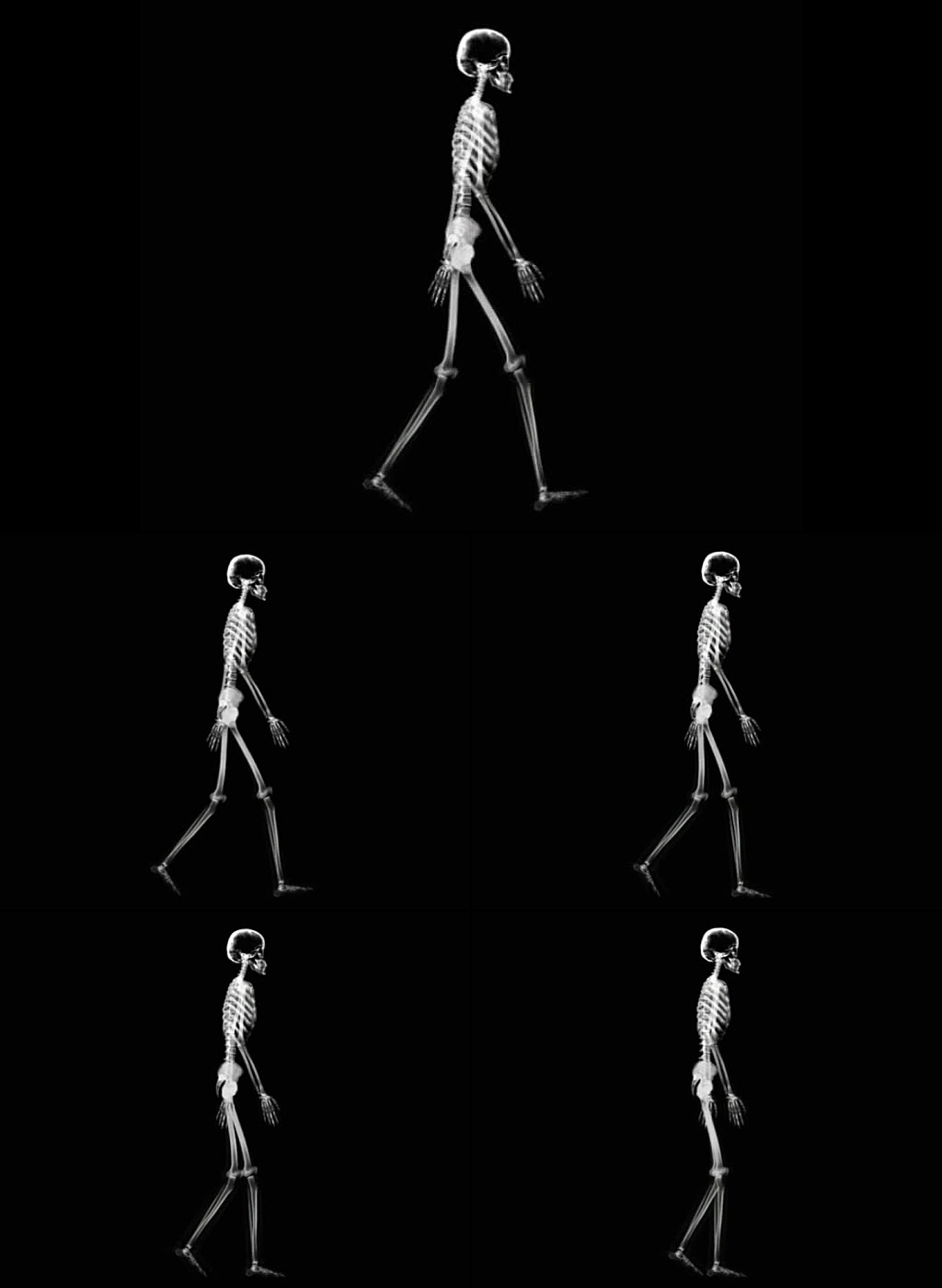 x光透视人体一个人走路