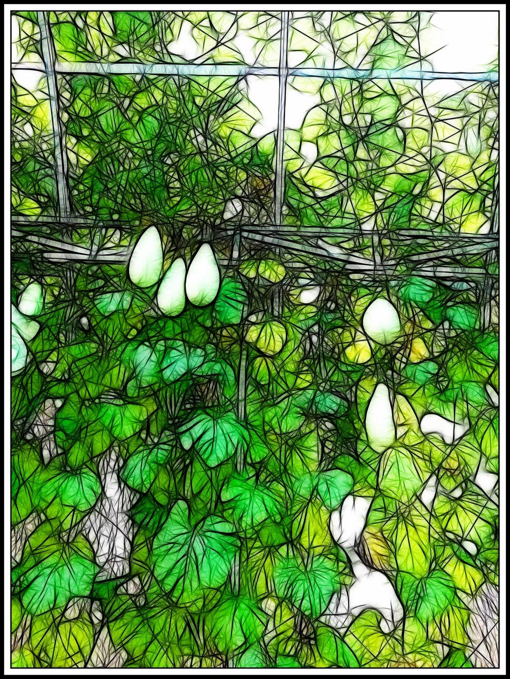 植物装饰画