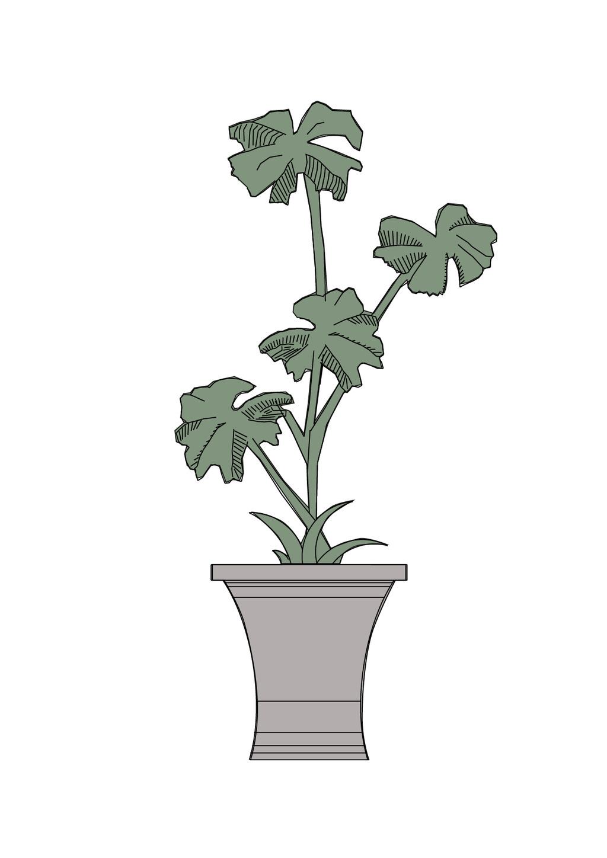 植物平年配置手绘图