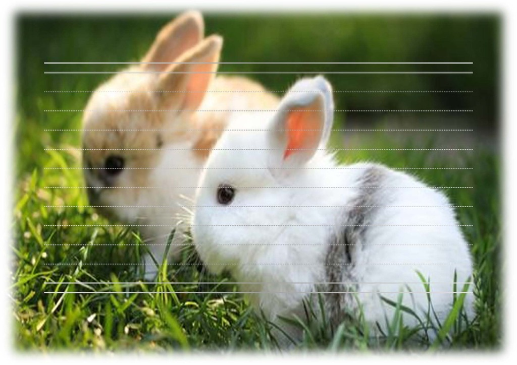 可爱 模板/[版权图片]动物系列信纸模板可爱兔子