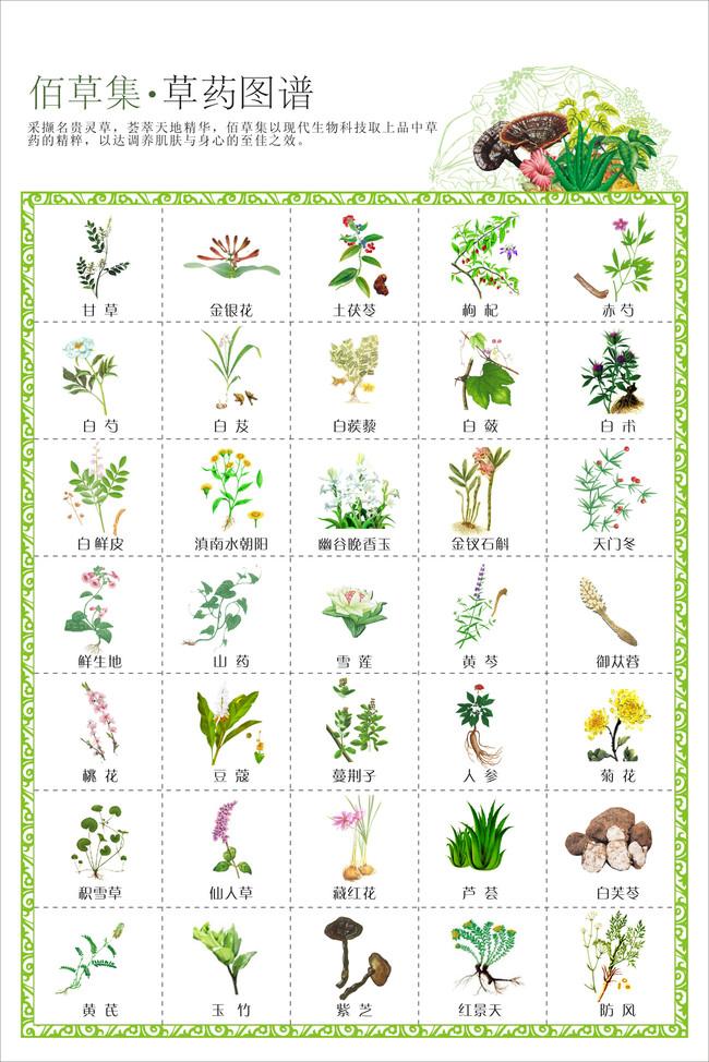 草药图谱草药示意图模板下载 草药图谱草药示意图图片下载 草药图谱