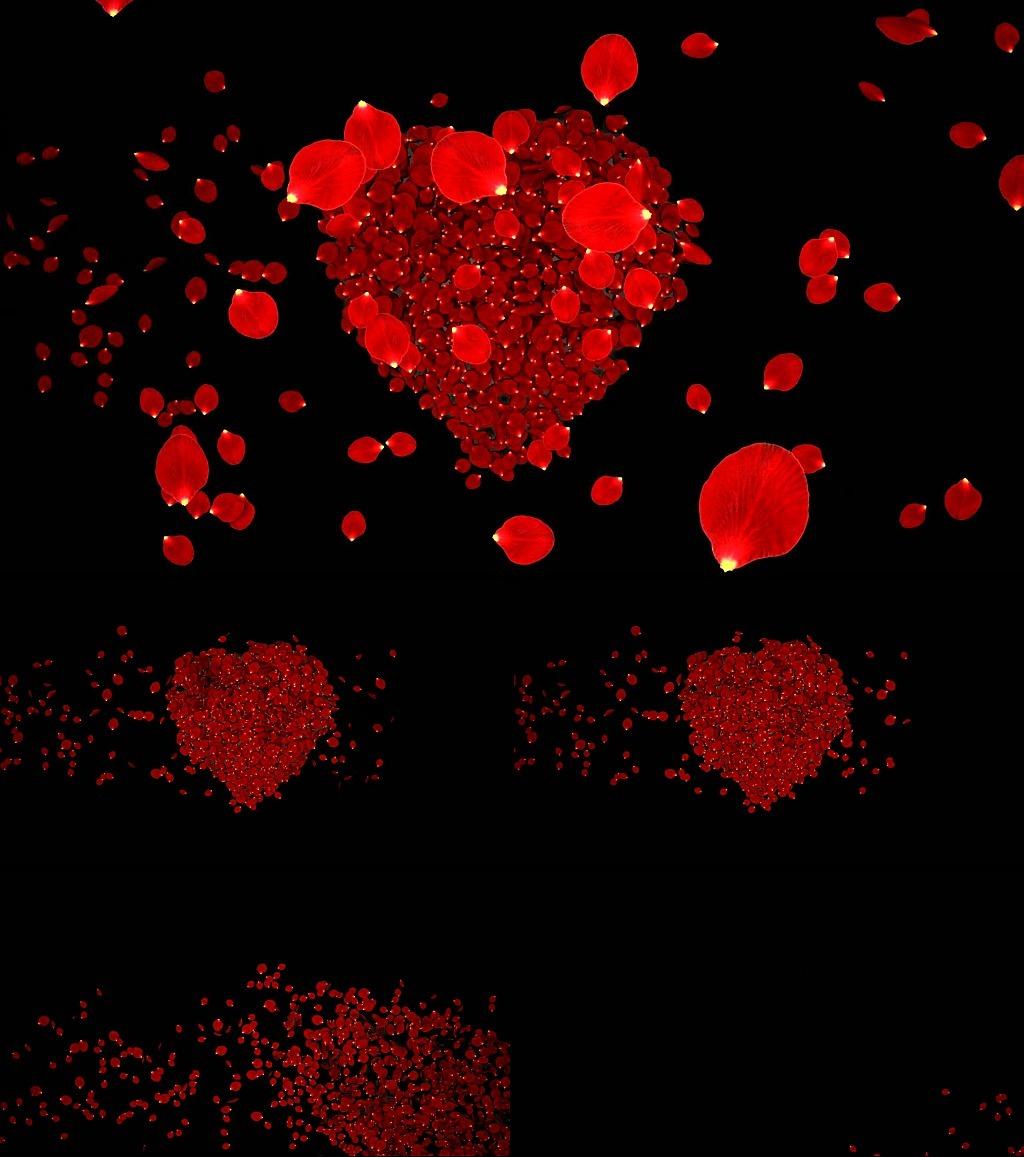 玫瑰花瓣散落心形视频素材模板下载(图片编号:)