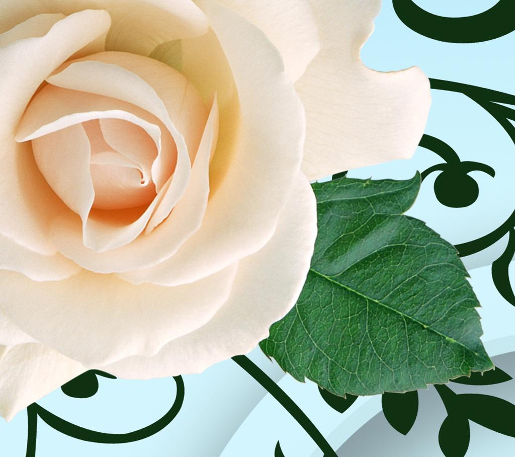 3d立体圆圈白色玫瑰花朵水影倒影玄关