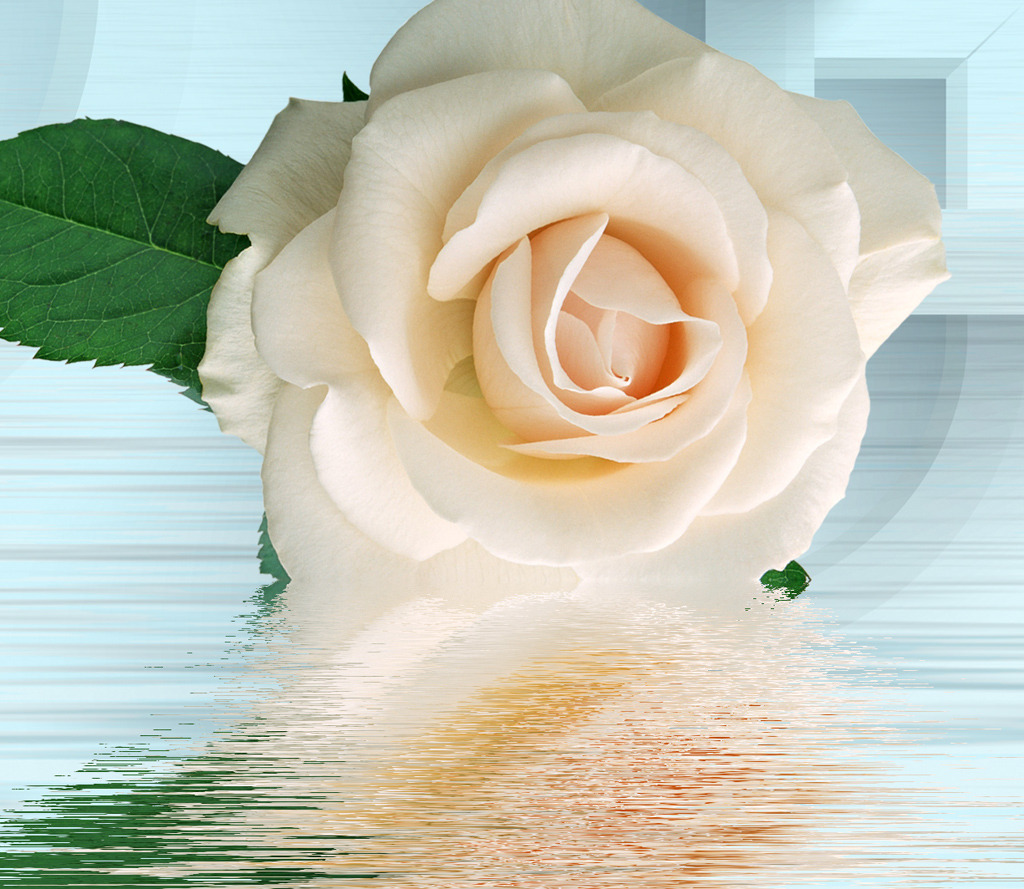 蓝色背景白色玫瑰花朵客厅电视背景墙