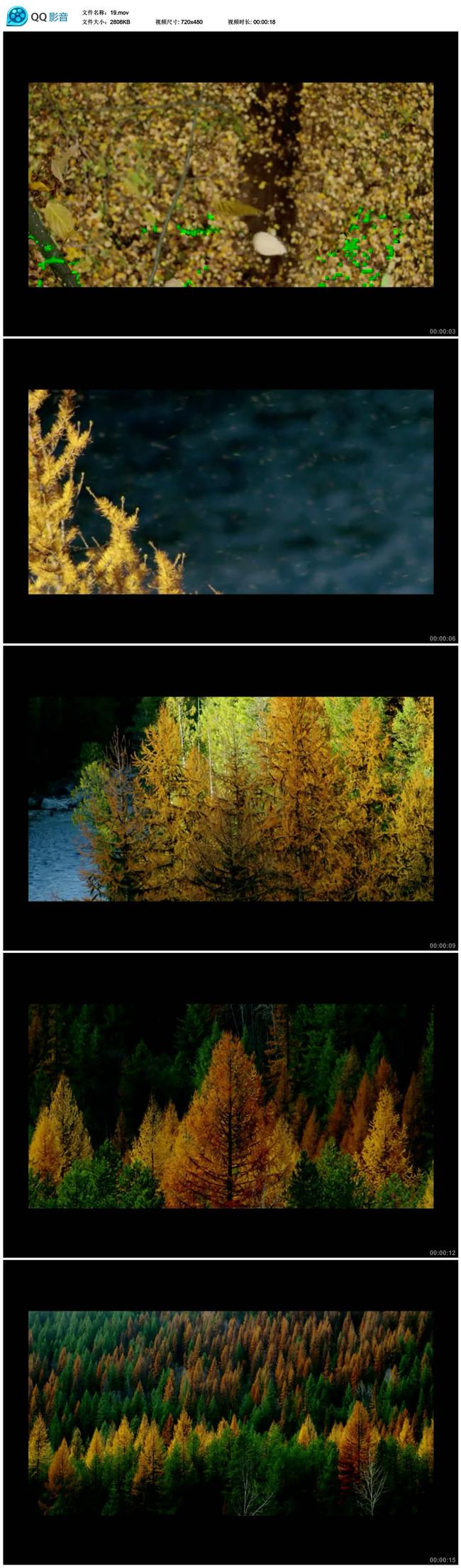 实拍秋天风景视频模板下载(图片编号:12383909)