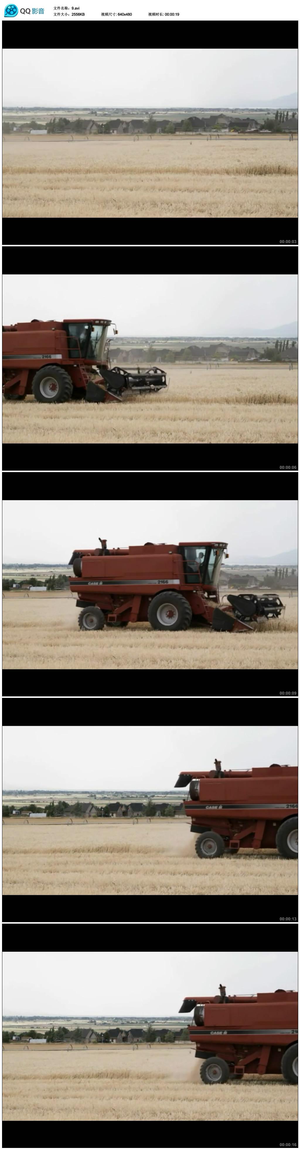 实拍小麦收割视频素材