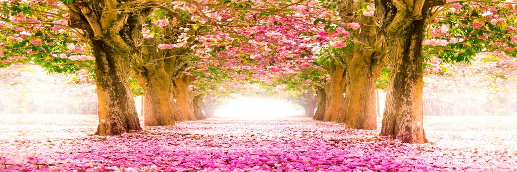 浪漫樱花树烤瓷水晶冰晶画图片