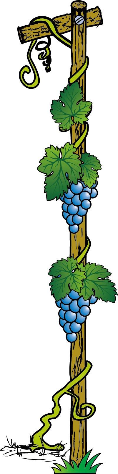 葡萄模板下载 葡萄图片下载 葡萄 葡萄藤 葡萄架